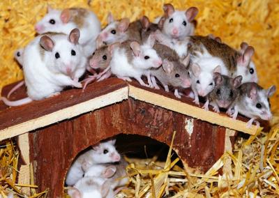 Too Many Mice!