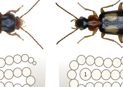 Beetle Blitz!