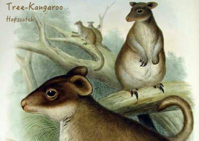 Tree Kangaroo Hopscotch (skip counting)