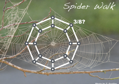 Spider Walk (probability)